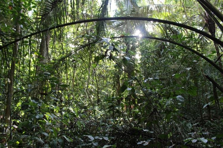 Amazonie bolivienne