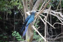 pampa_oiseau_3