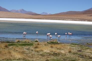 Lagune Cañapa, Sud Lipez, Bolivie