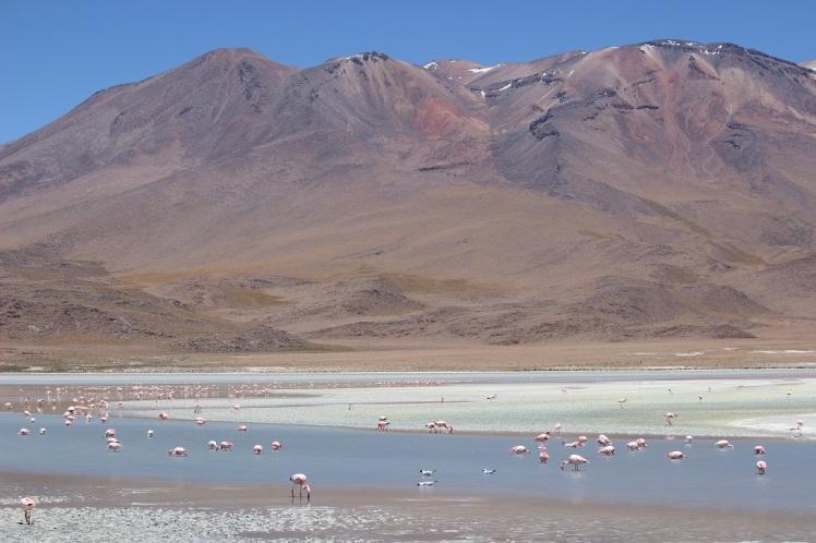 Lagune Hedionda, Sud Lipez, Bolivie