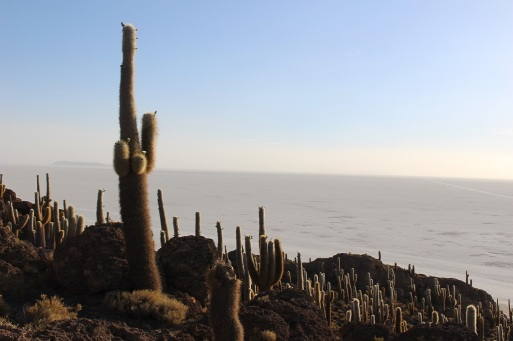 Isla Incahuasi, Uyuni, Bolivie