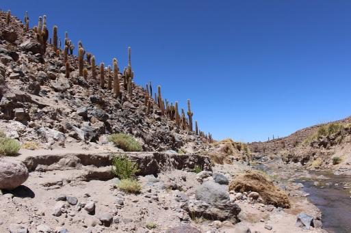 Vallée de cactus géants