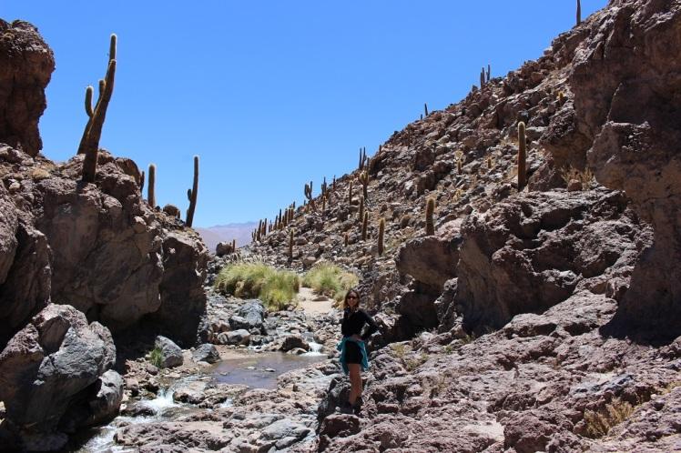 Vallée de cactus