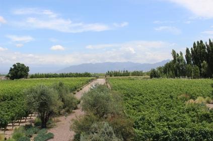 Vue sur les vignobles, Cruzat
