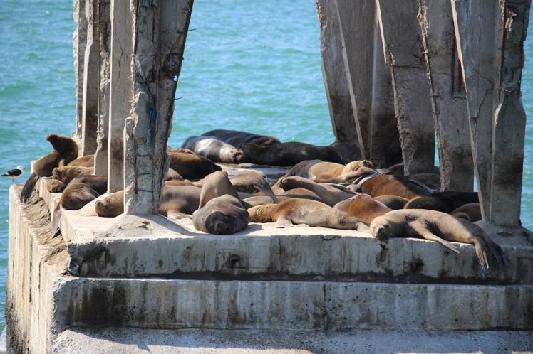 Des lions de mer affalés sous un pont en béton