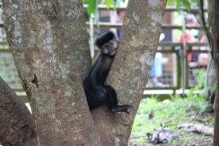 Un singe du parc