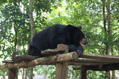 Les ours locaux protégés