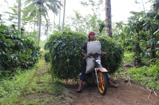 Travailleur dans une plantation de café